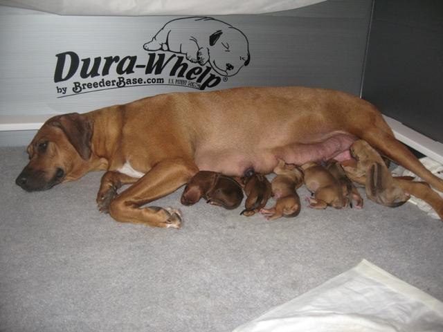 ayla_puppies_day1.jpg